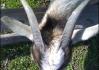 Koza se nám pustila do ráfku.. Byl čas zvednout kotvy..