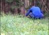 Hledá borůvky, nebo list.. (jehlíčí píchá..)