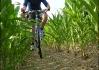 Kukurůůza drive - Bruuudži