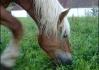 Koníci se nás nebáli. Cejtili z nás koně (klobása..)..