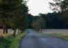 Rychlonožka Kodís. Čeká na opozdilce, nebo přepálil start a otáčí? ;) V popředí mnohé naznačuje brzdná dráha..