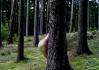 A taky tam rostou choroše. Prostě normální les :)..