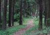 Lesem se nesem, zkratkou přes les Bohuňák a strrašný Písecký hory..