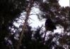 Záhadný neidentifikovatelný objekt v korunách stromů uprostřed divočiny..