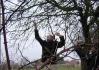 Brůdži naviguje Kerníse řečeného bidlo na jablíčko, které je ze všech nejsladší (jediný na stromě)..