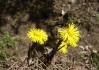 První jarní květinky. (pro květinoznalce Po..ěl - malá hádanka)