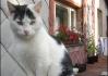 Portrét keramické kočky v bezejmenné vesnici..