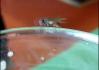 Speedy Fly! Pavlovi dvakrát oběhla dokola po půllitrů, což ho vůbec nevyvedlo z míry a s klidem mloka slunícího se na kameni prohlásil: